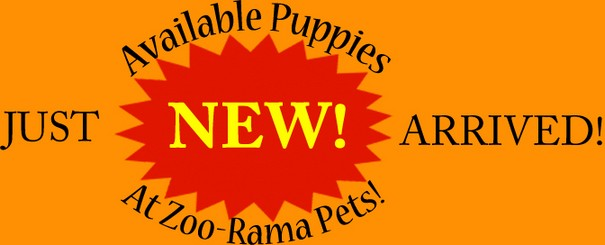 New Available Puppies