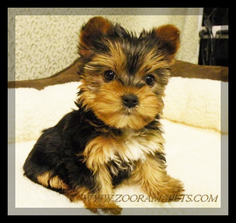 Welcome to Our Puppy Gallery